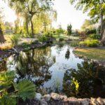 Revitalisation au jardin
